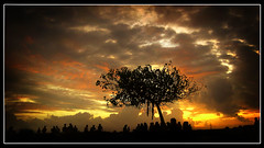 Beautiful World (SeXeS) Tags: world park sunset people sun tree male beautiful silhouette clouds landscape colours silhouettes rays maldives sexes blueribbonwinner beautifulworld mywinners ultimateshot maafannu uniquemaldives simplymaldives chillpo goldstaraward damniwishidtakenthat