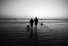 The Dog Walkers (Dimpleicious) Tags: ocean sea blackandwhite bw beach dogs water silhouette coast nikon waves megan wideangle molly cameron ripples orangecounty oc sanclemente 1224mm bulldogs dogwalk bently englishbulldogs walkonthebeach nikond40