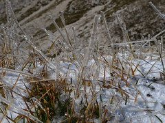 Grass icicles (ulysses68) Tags: italy mountains alps ice montagne italia alpi icicles   ghiaccioli