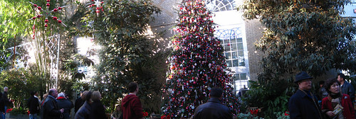Christmas Tree Panorama: US Botanic Garden