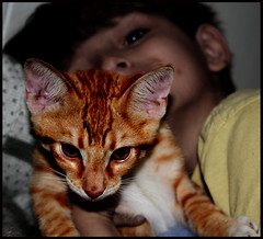 Jonah With Zippy When Zippy Was A Kitten (P.S.Zollo) Tags: cold love liza rain walk sunday goddess governor illusion claudia tomas stiletto syd curb obama understanding 1111 tru talkingstick twotrains rollz syderino statewacker rockeths latenightantic whychestersnakedzeppotakesthetrain redemptionfriscosong