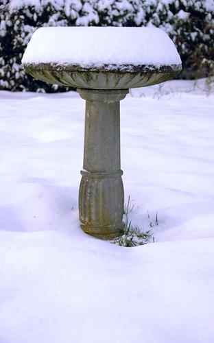 Snowy Birdbath