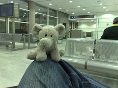 Joo no Charles de Gaulle (guilhermesa) Tags: charlesdegaulle joo elefante paquiderme