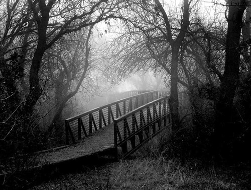 My love for all that life embraces nature in black white