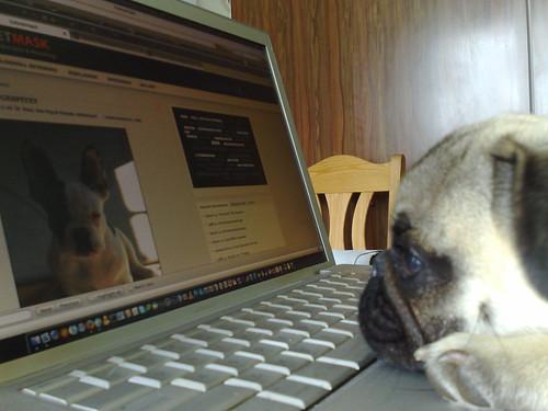 Blogkontrolle