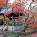 kinkaku-ji gardens