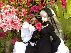 More sublime than any flower (Angy_Valentine) Tags: sd bjd superdollfie rozen maiden suigintou