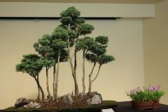 Pittsburgh Bonsai Society Spring Show