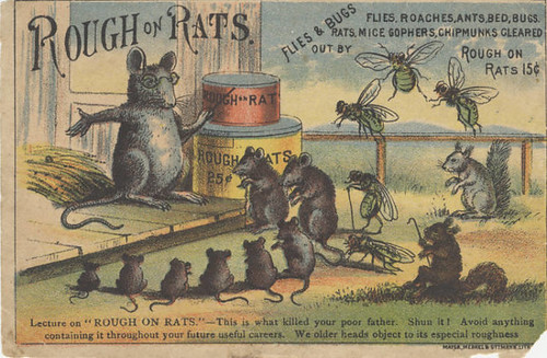 rat tutor teaching circle of young rats