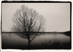 Lonely Tree (crowt59) Tags: bw white lake black tree ray texas lonely rowlett pictureperfect hubbard getrdun collectivedreamjournal crowt59 flickrlovers