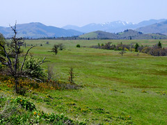 McCall Preserve (BoscoMtn) Tags: grass oregon meadow columbiagorge rowenacrest springqtr tommccallpreserve