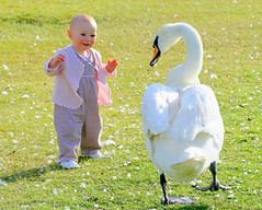 Can I be your friend? (An Gobn Saor) Tags: baby london girl swan friend child feathers kensingtongardens muteswan abigfave angobnsaor gobnsaor