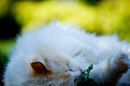 Mmm...  Catnip