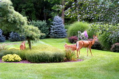Right in Our Back Yard (akgregory26) Tags: naturesfinest favoritegarden alittlebeauty