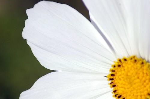 quarter fleur