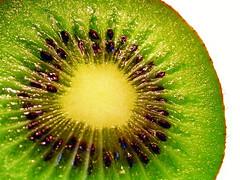 kiwi (✿ Graça Vargas ✿) Tags: fruit kiwi graçavargas duetos ©2008graçavargasallrightsreserved 194828110610