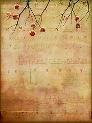 They Love to hear us Sing (Nika Fadul) Tags: flowers music flores tree bird song sing maestro rosas galhos partituras mnicafadul nikafadul