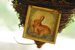 bunny nest (dogfaceboy) Tags: bunny nest crap dearflickr crapcrapcrap