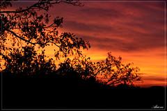 Sunset (aksie01) Tags: sunset tree canon eos zonsondergang boom hellevoetsluis zon 400d aksie01