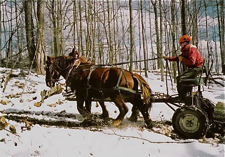 horse-logging