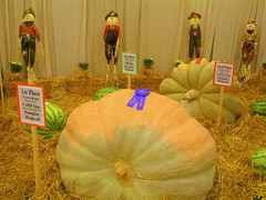 100 Things to see at the fair #61: Pumpkins