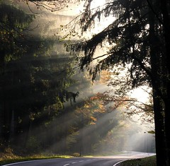 Road to the sun (Linda6769 (OFF)) Tags: road autumn tree forest germany woods herbst curvy thuringia sonne spruce sunbeam baum autumnal sonnenstrahlen sunray conifer nadelbaum schackendorf herbstlich konifere strase landstrase picturewithmusic