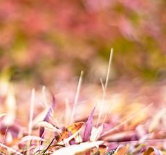 Pinkeh (©Komatoes) Tags: uk pink grass leaves leaf nikon purple bokeh kitlens devon exeter kit 2008 ludwell d40 leafbokeh pinkbokeh nikod40 ludwellvalleypark