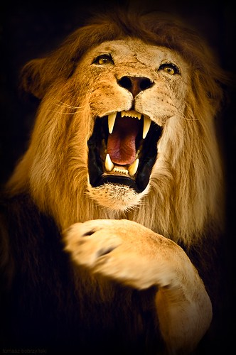 Roar of the King