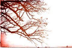 (Melody Harrison Hanson) Tags: trees red color ilovetrees mywords mypoetry treessing 2008melodyharrisonhanson