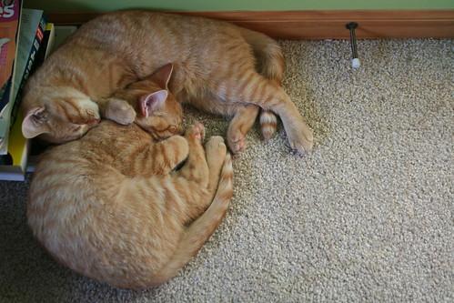 Mass of Kitties