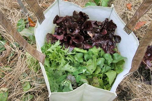 harvest in a bag