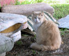 2008-11-05 Gabby