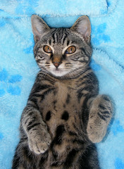 Funny paws (Julia-D) Tags: pet cute cat kitten kat chat gato gata neko katze gatto   gattina chaton gattino gatta   koneko katzchen