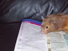 100_0322 (lfcgirl) Tags: hamsters
