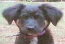 Kinship Circle - 2008-11-14 - Puppy Fatally Beaten By LA Firefighter 01