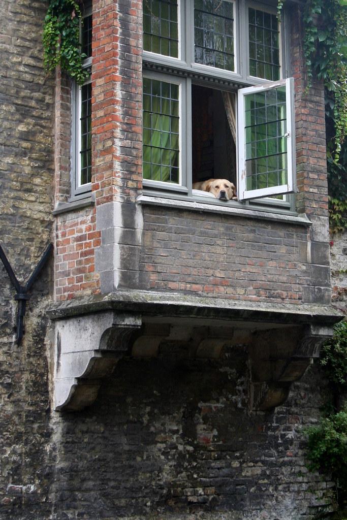 Dog in window, Brugges