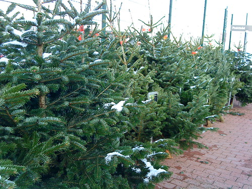Christmas Tree, on sale!