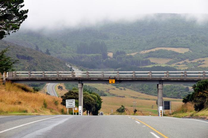 Go to Dunedin