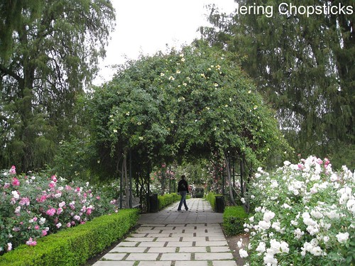 The Huntington Library, Art Collections, and Botanical Gardens (Rose Garden) (Spring) - San Marino 9