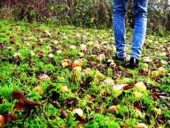 Adam's Apples Dec08 044 (Katherine Claro) Tags: adamsapple