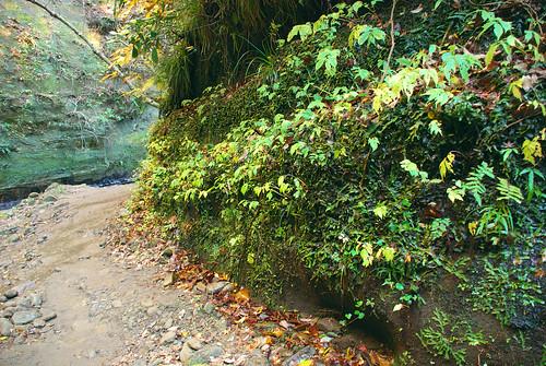 梅ヶ瀬渓谷 2