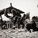 lutte :: Senegal