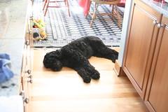 skippy on the floor