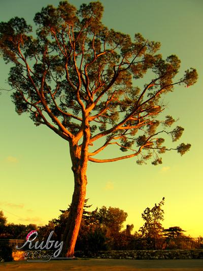 castle_2_02_tree