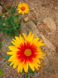 Green Mountain Flowers 2