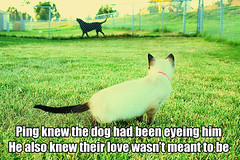 Dog eyeing ping (Xuilla) Tags: gay dog pet cats pets green love dogs grass cat fence puppy pups puppies kitten lol edited kitty siamese kitties homo homosexual pup fusion ping fag caption faggot catmacro lolcat lolcats editedpets editedpet