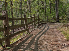 Wooded Path (scottnj) Tags: trees shadow nature grass leaves fence shadows path trail 1001nights lightandshadow allaire splitrailfence allairestatepark seenonflickr scottnj
