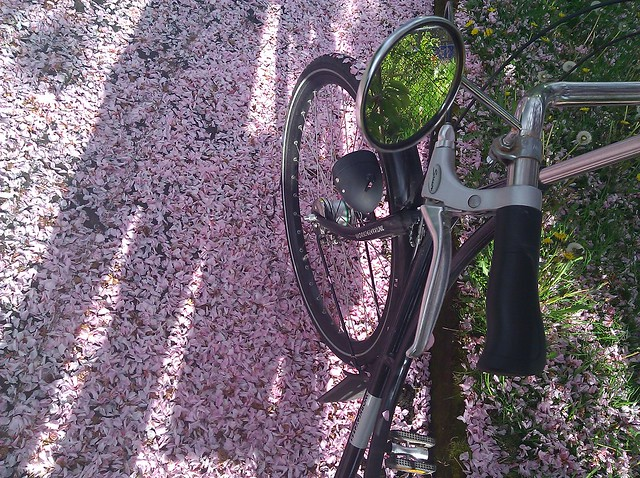 PEleanor O the Dutch Bike on a street thickly carpeted with pink cherry blossom petals, and a shadow of DarkEmeralds