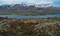 moss and Skarðsheiði