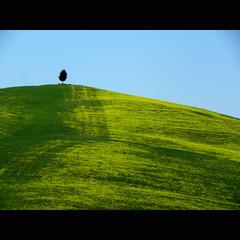 Softness  green (s@brina) Tags: verde green softness velvet toscana valdorcia albero morbidezza colorphotoaward elitegalleryaoi